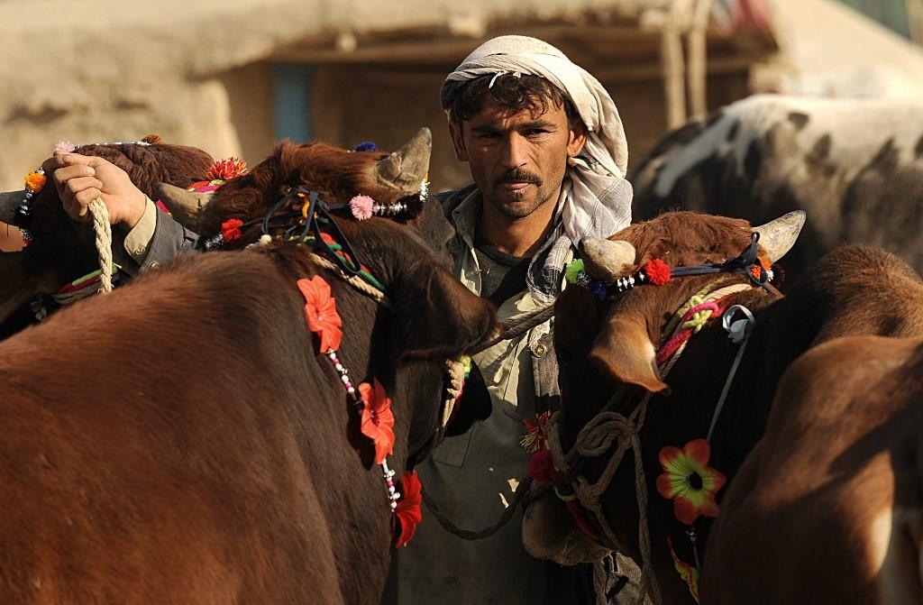 Die Zahl der Schlachtfest Opfer Tiere in Pakistan ist stärker gestiegen als in den letzten Jahren.